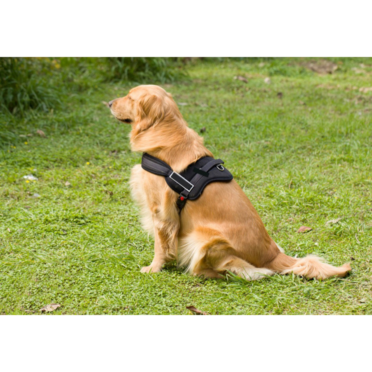 soft padded harness for large toy breed and medium size dogs. Black Bedroom Furniture Sets. Home Design Ideas