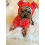 Chihuahua and Small Breeds Cute Teddy Bear Fluffy Dog Coat
