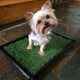 Small Flat Based Pet Toilet for Puppies