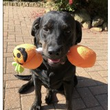 """HALLOWEEN PUMPKIN  PET TOY FOR """"TRICK OR TREAT"""""""
