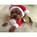 chihuahua and Small Breed Dog Santa Costume