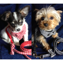 Waggywinks Small Dog Embellished Soft Fabric Harness and Lead Sets