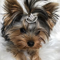 Stunning Bling Tiara with a Double Heart Pet Hair Piece