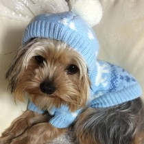 Winter Pompom Hooded Pet Jumpers