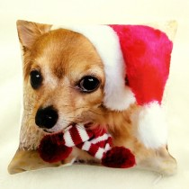 Waggywinks Christmas Scatter Cushions Featuring Coco
