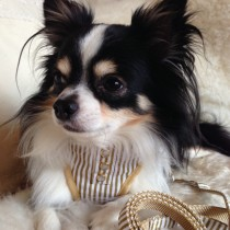 Bling Pinstriped Harness and Lead Set-Beige