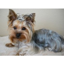 Stunning Bling Tiara Pet Hair Piece