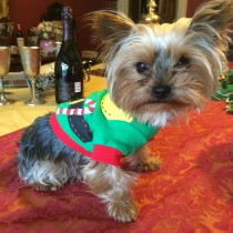 Pet Christmas Elf T-Shirt