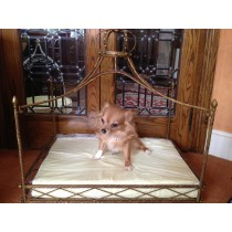 Small Dog Luxury Crystal Crown Bed