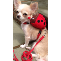 Super Cute Chihuahua and Yorkshire Terrier Ladybird Harnesses