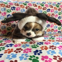 Pet Christmas Reindeer Costume